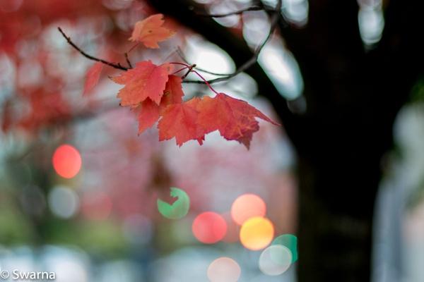 Fall Color III by Swarnadip