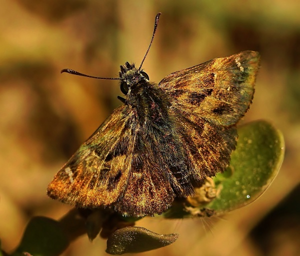 Dinghy Skipper by georgiepoolie