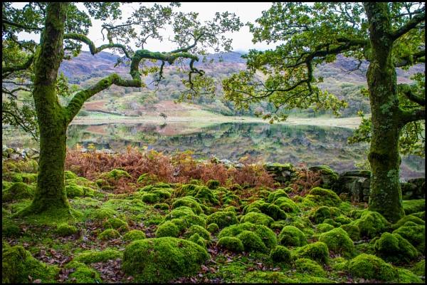 Strange Mossy Humps by bwlchmawr