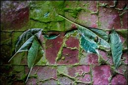 Green Leaves on an Orangery Floor
