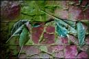 Green Leaves on an Orangery Floor by bwlchmawr