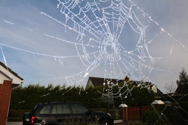 Web by gunner44