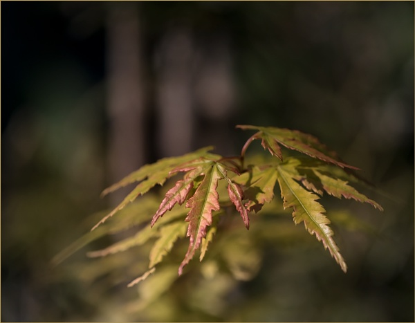 Pygmy Leaves by taggart
