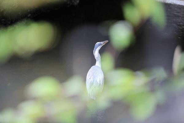Heron in Beverly Brook by goochian3