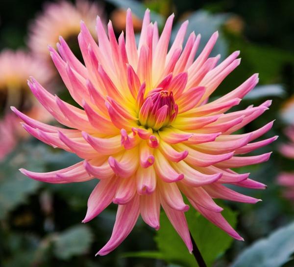 Flower at Eden by Madoldie