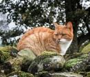 Cat a walling by BillRookery