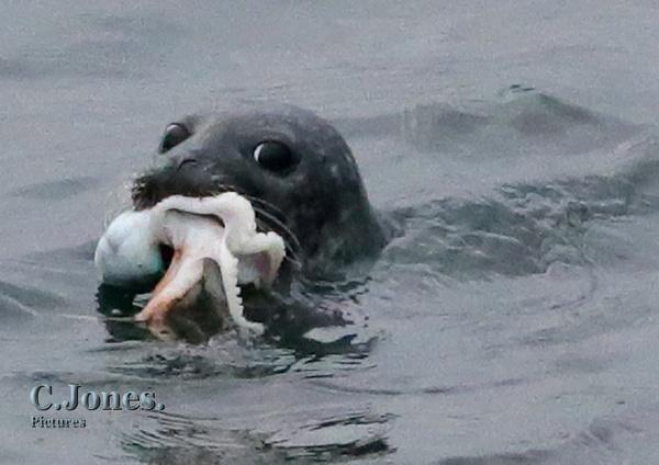 Seal Dinner. by cjones