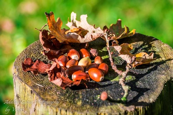 Autumn in October by Sambomma
