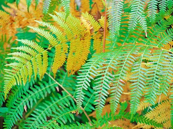 abstract fall fern by LaoCe