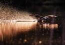 Soft landing by hannukon