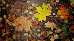 autumn leaves (plus versions)