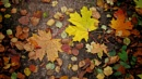 autumn leaves (plus versions) by leo_nid