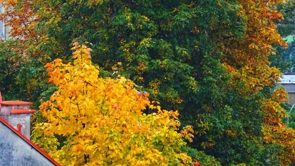 Golden autumn (2) by Kabrielle