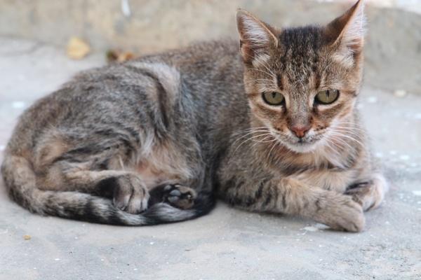 Cat by Lakkou
