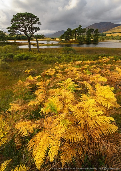 Loch Tulla Ferns by AntHolloway