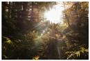 The Sun by bliba