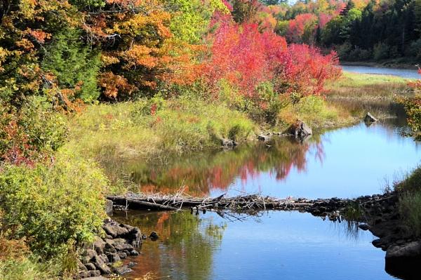 Autumn in Maine by Joline