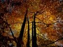 Autumn colours, Castle Drogo by RuthyJ
