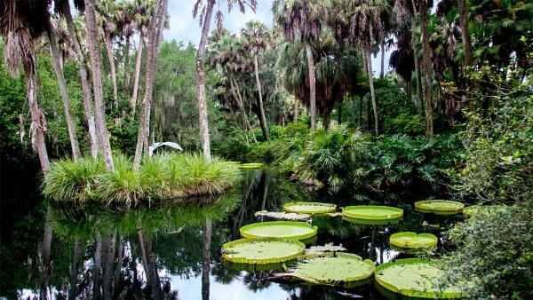 Little Florida pond