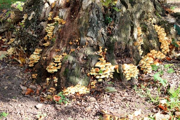 Plenty of fungi; not a mushroom in sight by Ralph