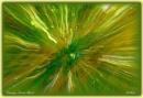Canopy Zoom Burst by Delbon