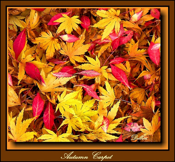 Autumn Carpet by Delbon