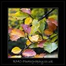 Autumn Leaves by r0nn1e