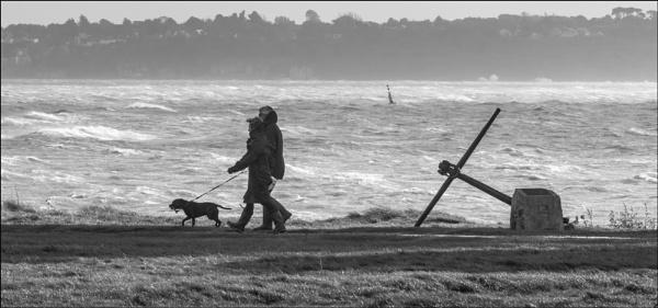 Windswept by mjparmy