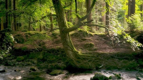 autumn N.Ireland by atenytom