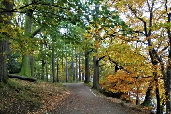 Autumn Pathway by ANNDORASBOX