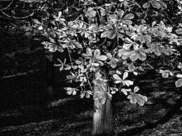 Leaf mono