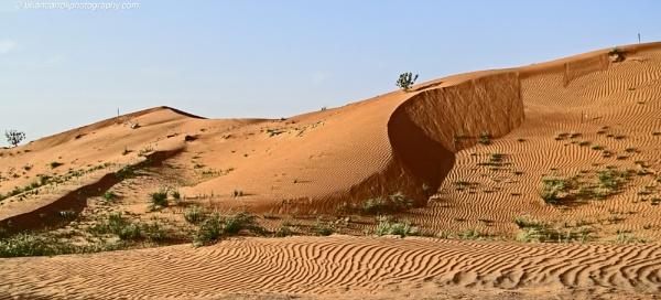 United Arab Emirates desert north east of Sharjah by brian17302