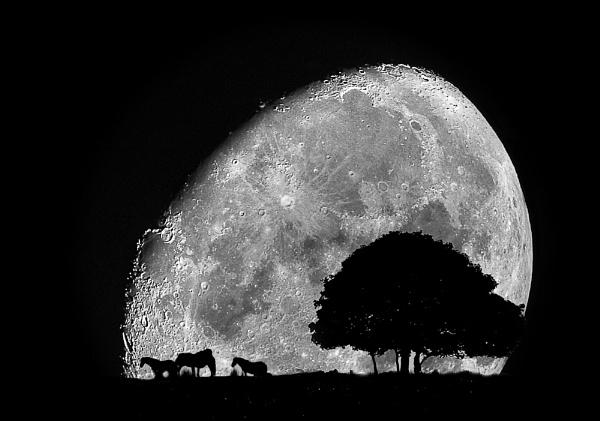 Moon Horses by snapbandit