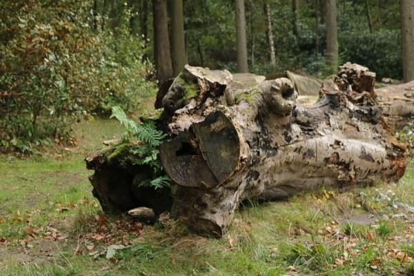Wood by gunner44