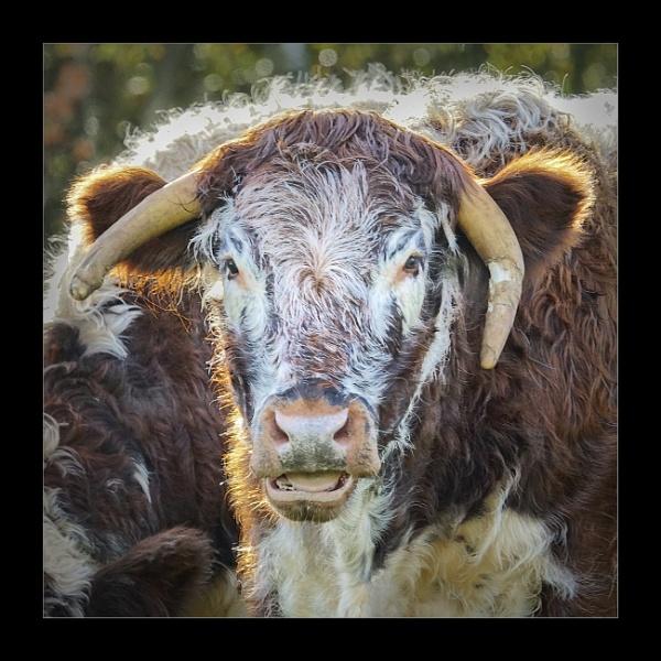 The Bull by deavilin