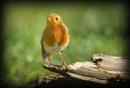 just a little Robin by deavilin