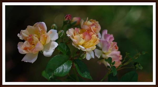 Framed ............. by Mollycat