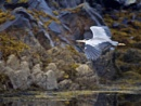 Heron in Flight by hrsimages
