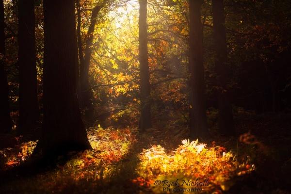 Autumn magic by Nobbythenobster2
