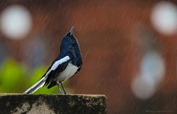 Kiss In the Rain by BUMBA