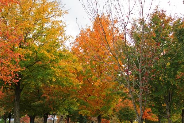 Maplewood Autumn 8 by lesleysfix