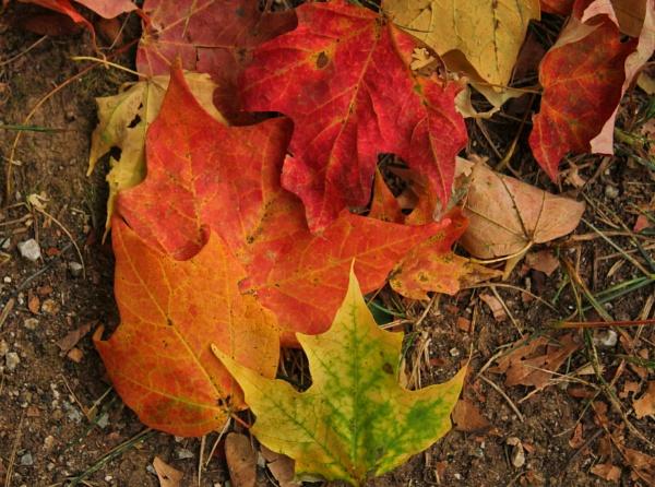 Autumn Leaf Litter 2 by lesleysfix