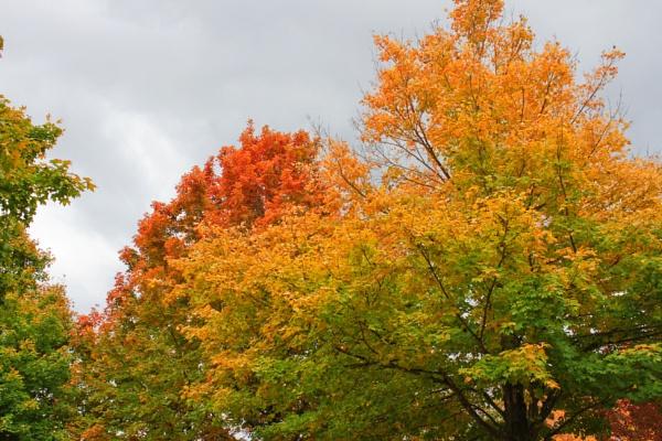 Maplewood Autumn 9 by lesleysfix