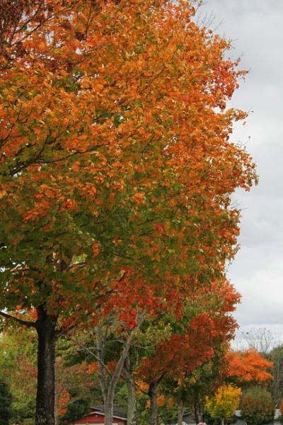 Maplewood Autumn 10 by lesleysfix