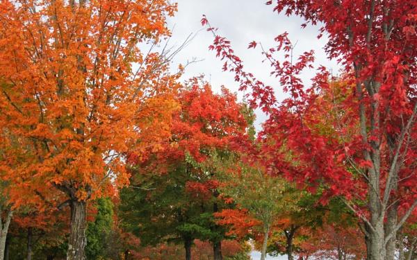Maplewood Autumn 11 by lesleysfix