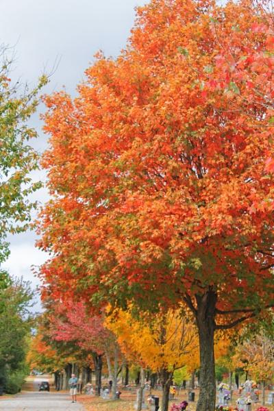 Maplewood Autumn 12 by lesleysfix