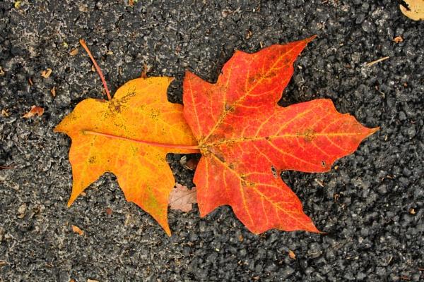 Autumn leaf Litter 3 by lesleysfix