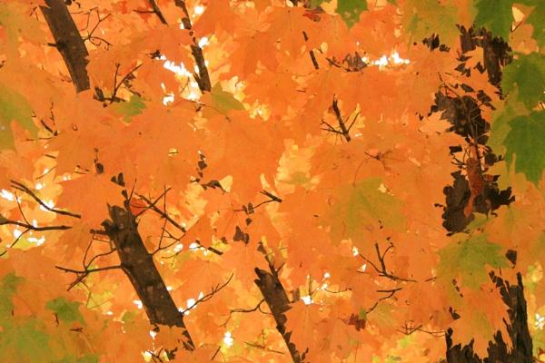 Golden Canopy by lesleysfix