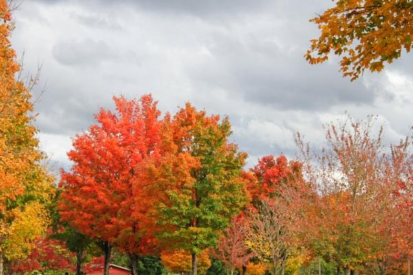 Maplewood Autumn 13 by lesleysfix