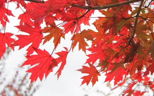 Shades Of Autumn by lesleysfix